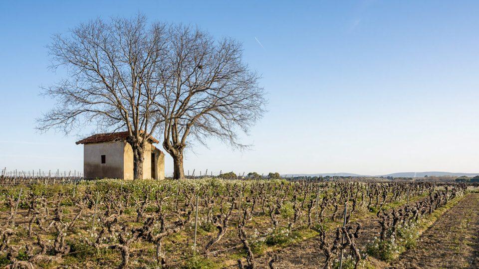 Un mazet au milieu des vignes