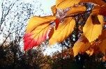 IMG_7366-arboretum-allegee