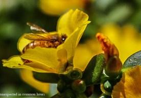 Honeybee 4