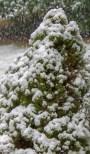 March snow 3