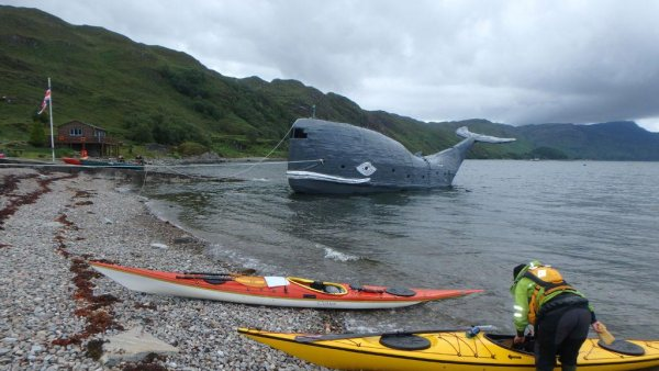 sperm whale sea kayaking