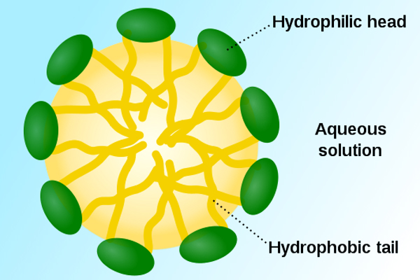 Micelles Structure