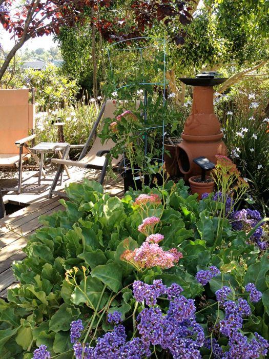 In the garden, spring 2014