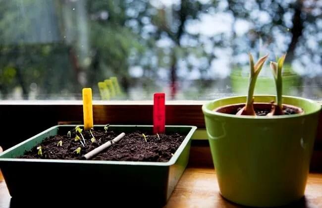 L'occorrente basilare per la semina.