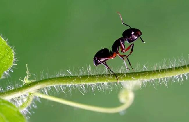 Formiche invadono le tue piante? Ecco le cause.