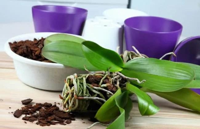 Contenitori e supporti per Orchidee, quali scegliere.