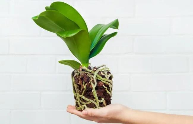 Il terriccio per le Orchidee.
