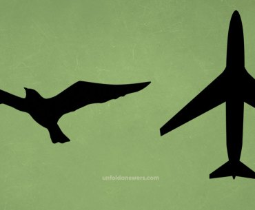 Birds and Aircraft