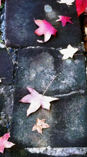 Stone Wall and Autumn Leaves