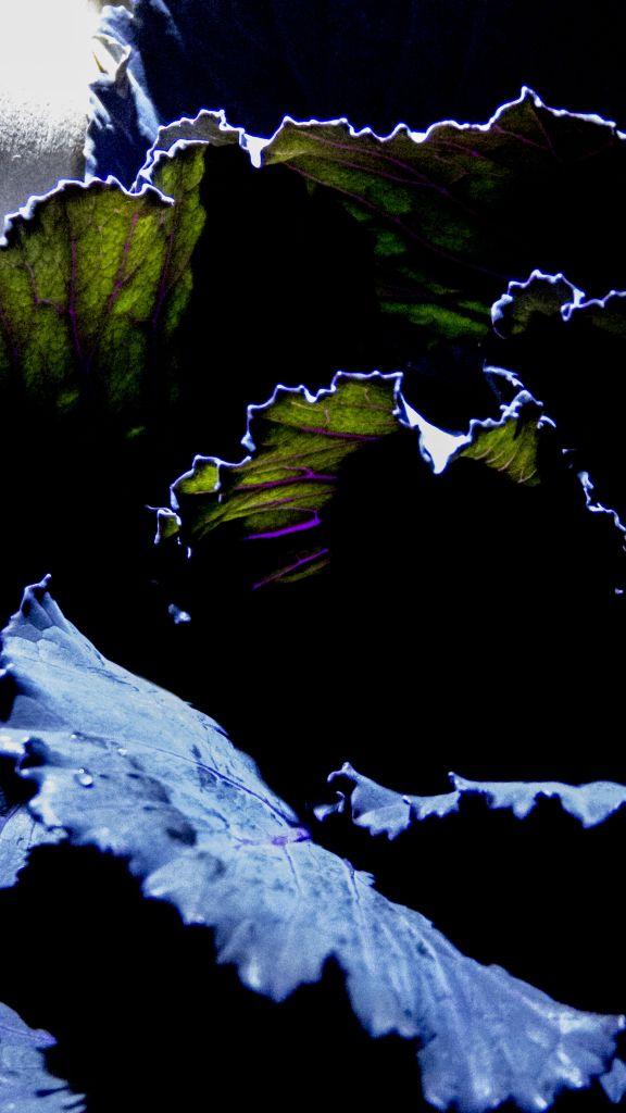 notan,light,dark,black_cabbage