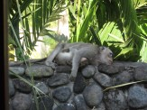 We woke up the first morning to find this guy lounging on the wall outside our room.