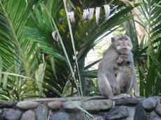 Monkey daddy.