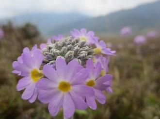 Bhutan-68