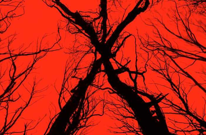 """Blair Witch"" is the rare horror sequel that maintains the tone and quality of the original while also bringing new scares. Photo courtesy of Lionsgate."