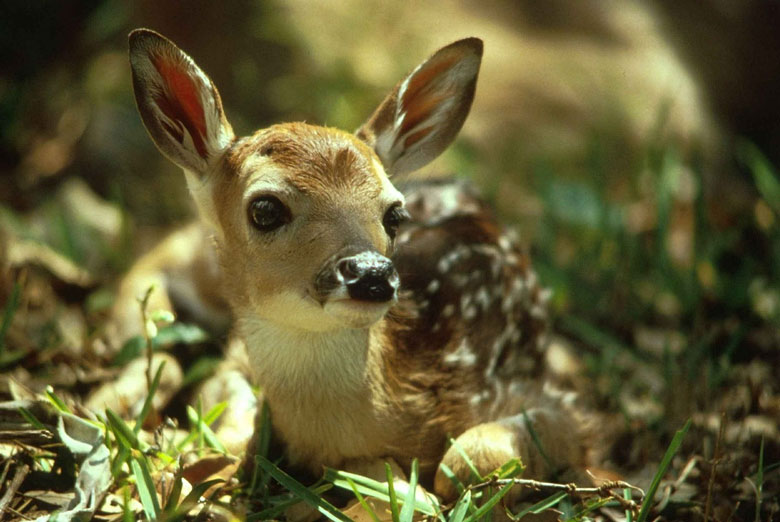 The Theology of Audrey Hepburn and Pippin the Deer