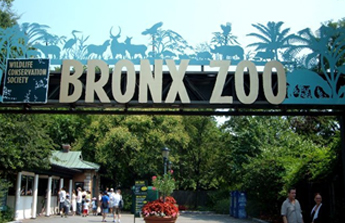 The-Bronx-Zoo