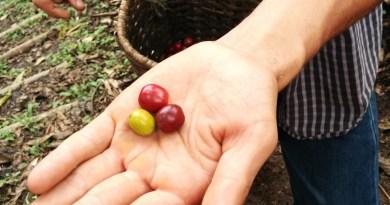 Voyage en Colombie : Medellin et la vallée du café