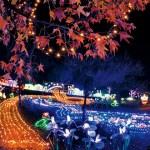 京都のクリスマスイベントおすすめ☆