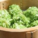 白菜の栄養価と白菜シュウマイの作り方紹介【青空レストラン