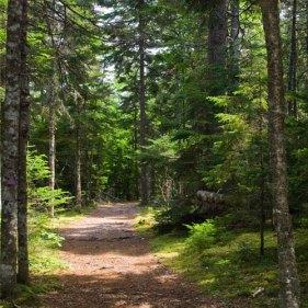 Resultado de imagen para trail walks nature