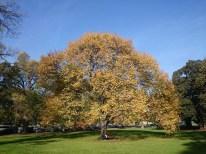 Fall wishing tree