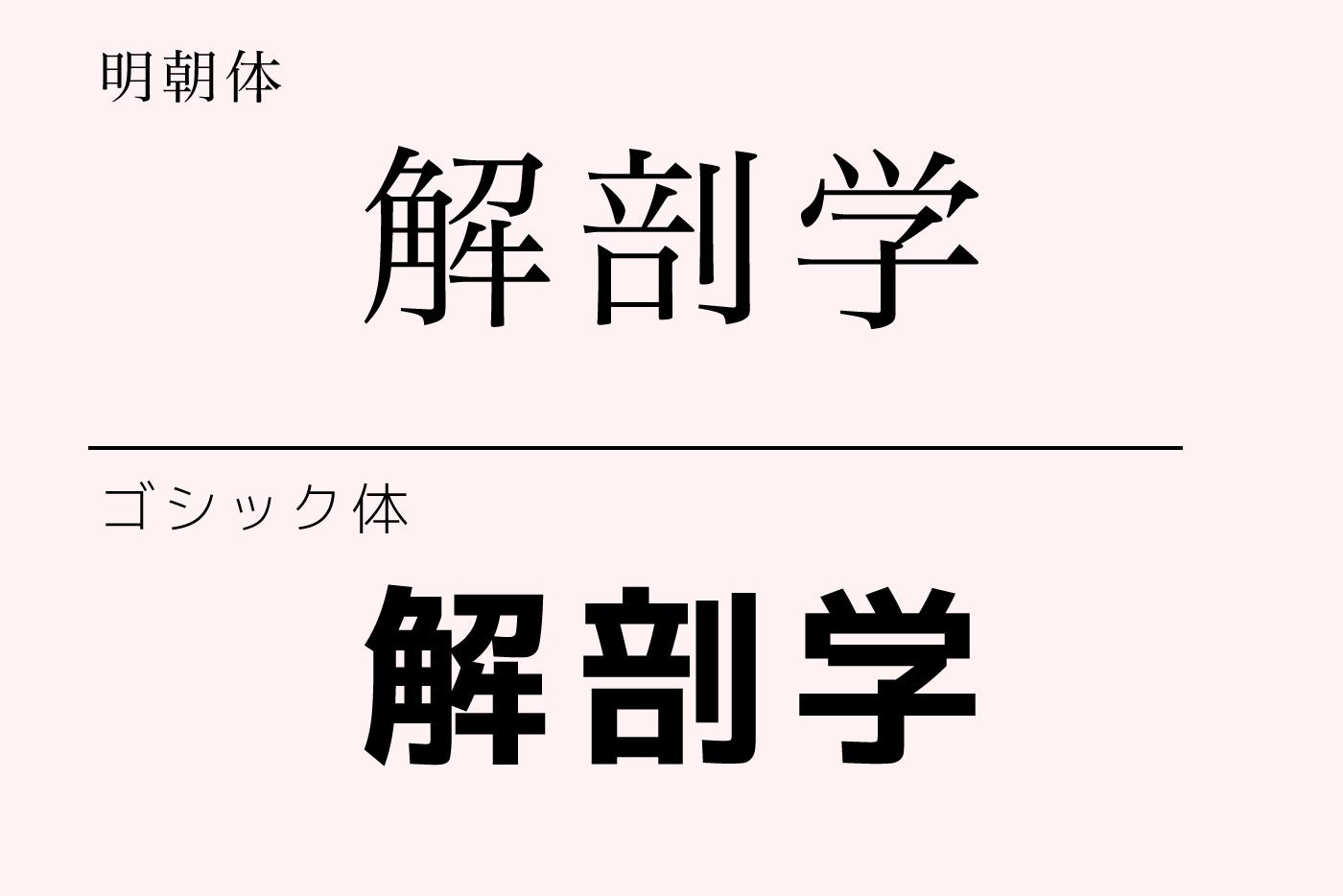 解剖学の文字のフォントの違い