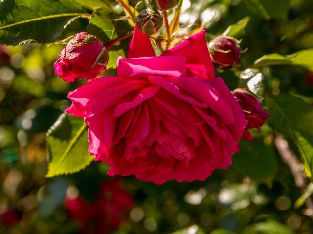2019.05.22-Gradina-Botanica-053