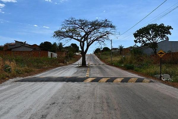 O exemplo inspirador da cajazeira no asfalto