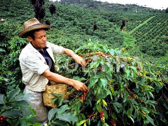 קולומביה אורגני
