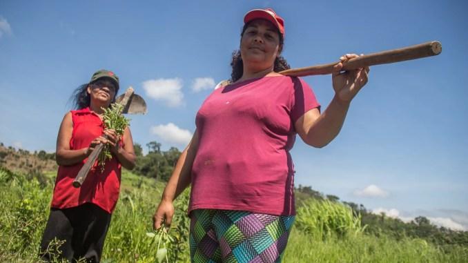 duas mulheres agricultoras familiares com enxada nas mãos cuidando da plantação
