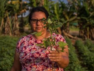 mulher agricultora familiar segura ramo de plantação