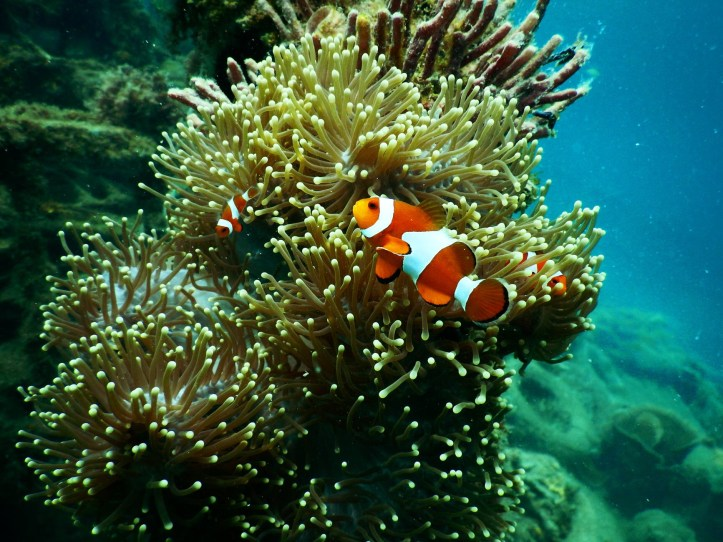 Coral is not a species: it is a symbiotic community that could not survive separately