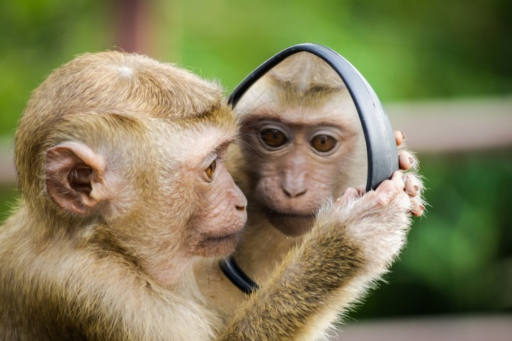 monkey looking in the mirror.  Does he have a secret?