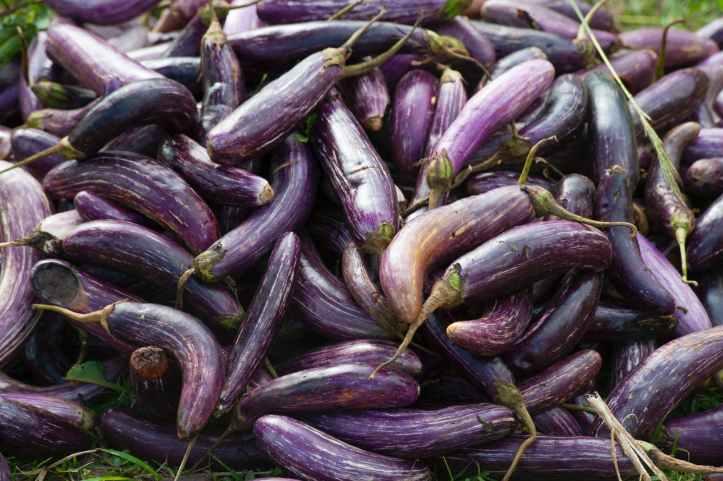 eggplant vegetable plant lot.  Sometimes dick pics seem to pile up like this