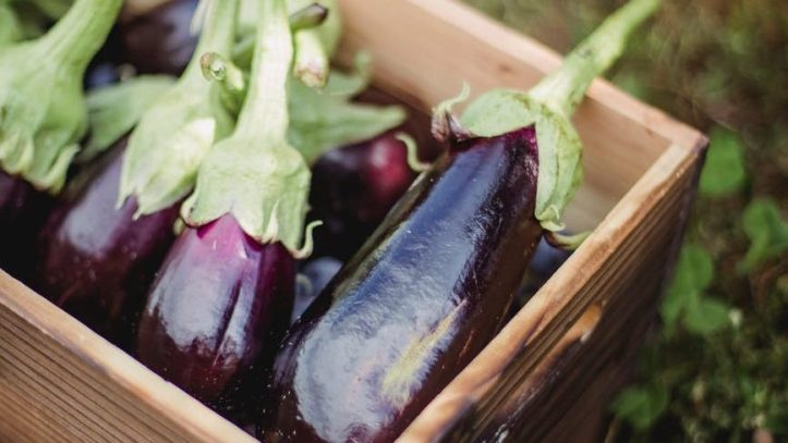 ripe healthy eggplants placed in box in farm.  Much nicer than unsolicited dick pics