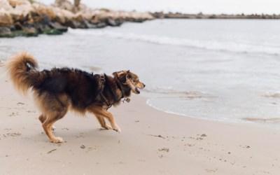 Se aprueba a propuesta de Izquierda Unida Podemos habilitar una playa para perros