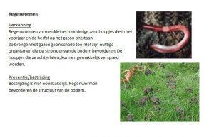 Regenwormen-Herkenning