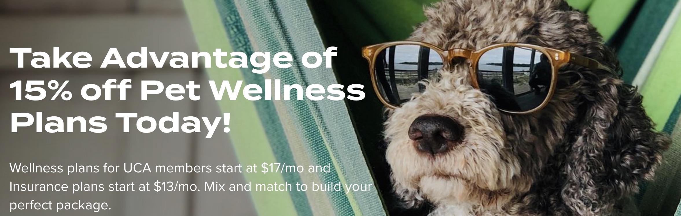 pet wellness with wagmo