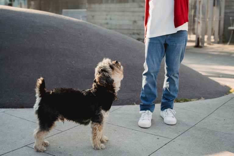 Adopting A Dog Is Key to Improving Your Community
