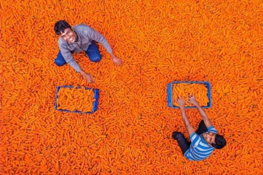 Happy-Carrot-Farmer