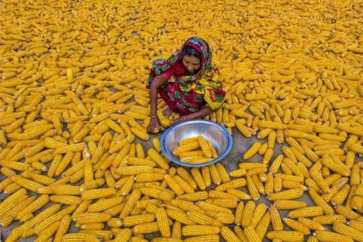 Happy-Corn-Farmer