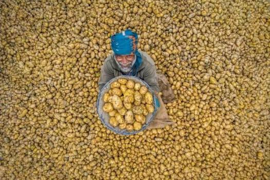 Happy-Potato-Farmer