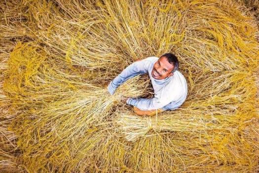Happy-Wheat-Farmer