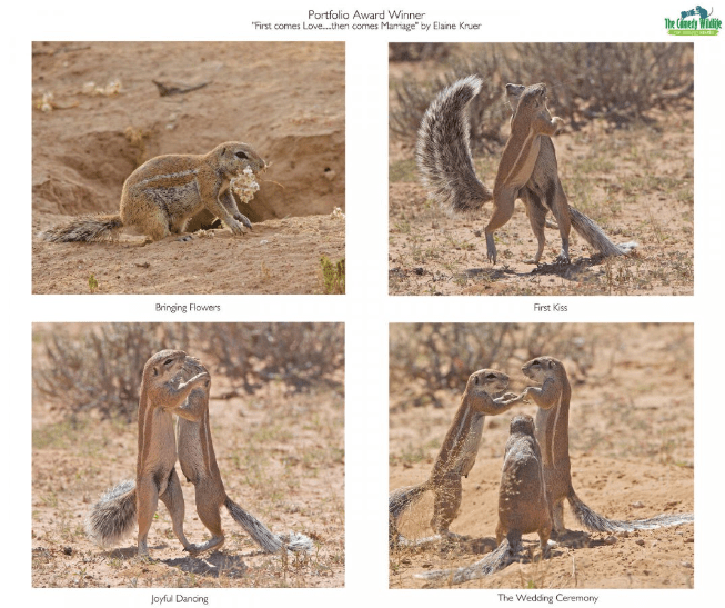 Screenshot_2019-11-20 2019 Winners Comedy Wildlife Photography Awards - Conservation through Competition(3)