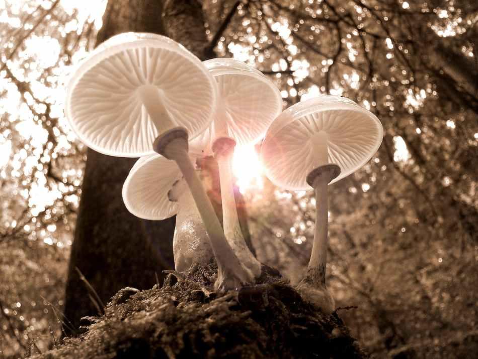 forest fungus landscape moss
