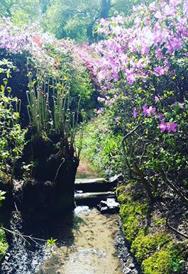 Isabella Plantation at Richmond Park