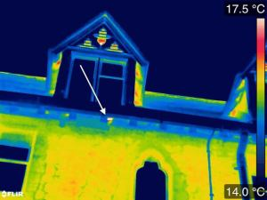 Thermal image of an occupied swift nest (arrowed)