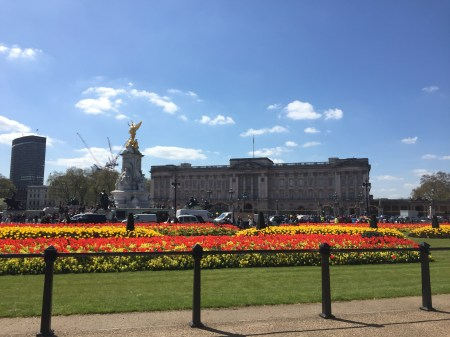 Took this snapshot of Buckingham Palace on one of my strolls around the city this week. The tulips in front of the property look gorgeous this time of year.
