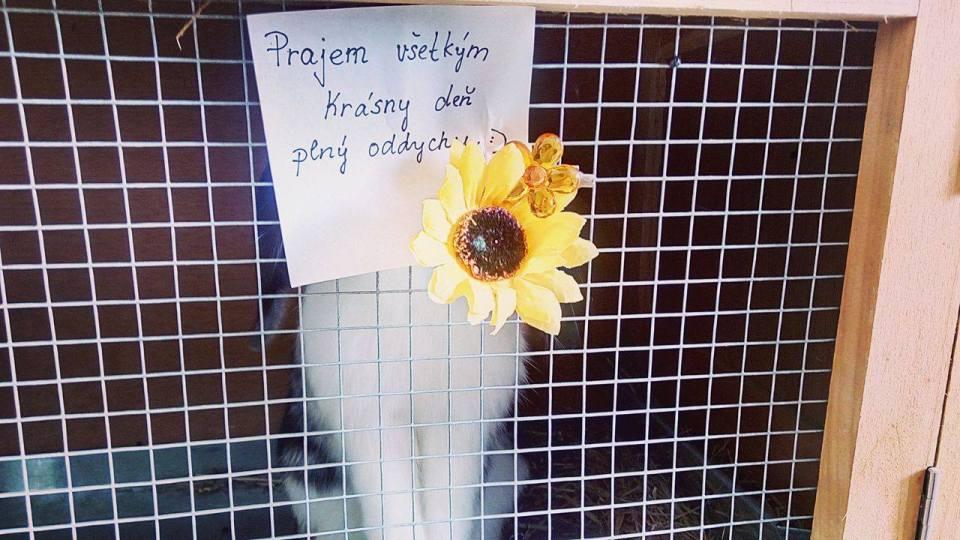 Prajem krásny deň (Foto: Romana Valenčáková)