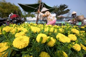 Flowers for sale in Mekong delta Cai Rang floating market in Can Tho Vietnam